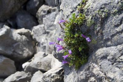 A planta crescendo sobre a lava é um exemplo de como ocorre a sucessão ecológica primária