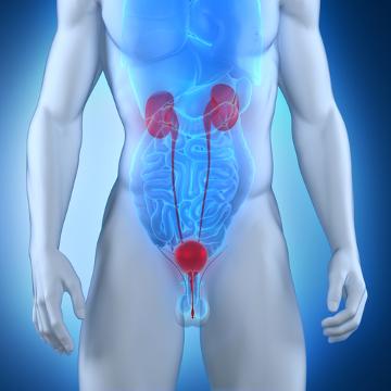As infecções urinárias podem acometer qualquer parte do aparelho urinário, como rins, bexiga, entre outras