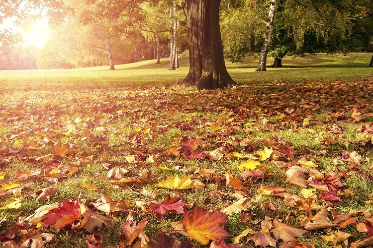 A estação do outono é comumente associada à perda de folhas das árvores