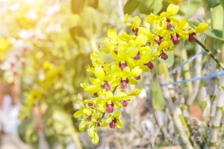As orquídeas são exemplos de plantas monocotiledôneas