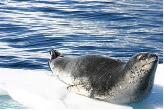A vida dos animais em regiões polares é mantida graças à densidade do gelo em relação à da água