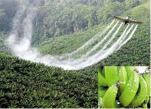 A utilização de agrotóxicos