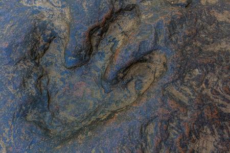 A pegada fossilizada é um exemplo de icnofóssil