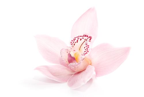 A beleza da flor está em sua simplicidade, o que gera admiração. Com o texto também é assim, pois a simplicidade na escrita é uma qualidade textual