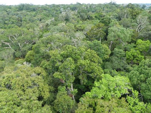 Vista aérea da Floresta Amazônica, em Manaus