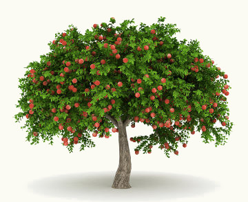 As árvores fornecem sombra, alimento, matéria-prima, além de ter papel primordial no meio ambiente