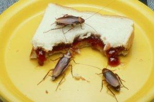 Não deixar alimentos destampados é uma boa estratégia para minimizar<br>a infestação de baratas e as doenças por elas transmitidas.