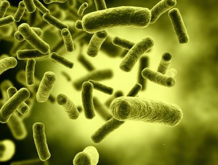 Algumas bactérias são capazes de realizar a quimiossíntese