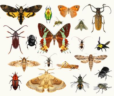 Os insetos pertencem ao filo dos artrópodes