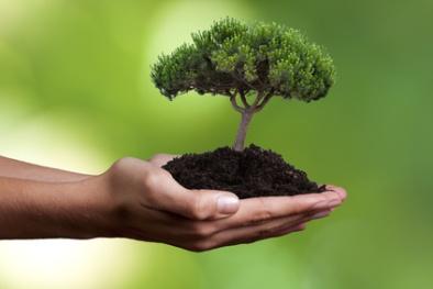 A humanidade precisa encontrar o equilíbrio entre consumo e renovação dos recursos naturais