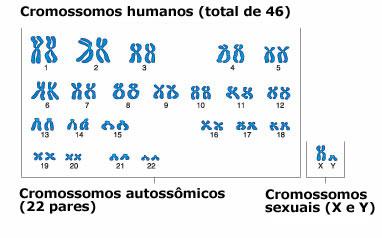 Podemos ver nesse cariótipo humano os cromossomos autossômicos e os sexuais (X e Y), totalizando 46 cromossomos