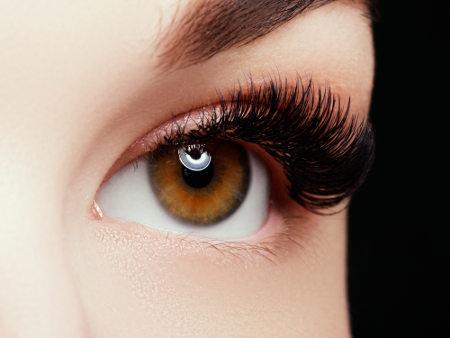 Os olhos garantem a captação de imagens