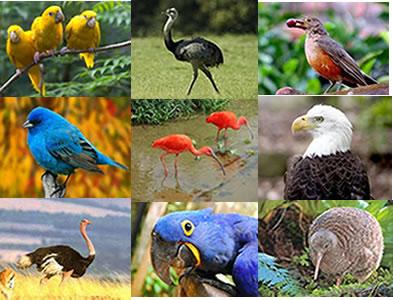 A classe das aves é a mais numerosa entre os vertebrados terrestres