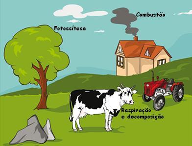 Representação esquemática dos principais processos envolvidos no ciclo do oxigênio