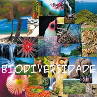 Biodiversidade no Brasil - PrePara ENEM