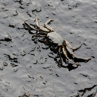 O derramamento de óleo é um problema grave que afeta o meio ambiente e causa danos irreversíveis