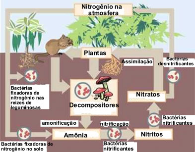 O nitrogênio é um elemento muito importante para os seres vivos