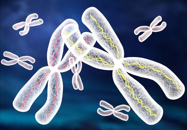 As aneuploidias são alterações no número de cromossomos