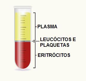 O plasma é um dos componentes do sangue