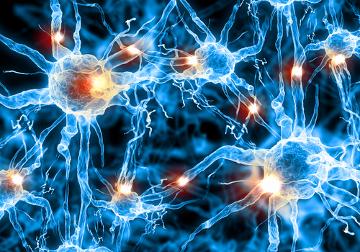 O impulso nervoso ocorre quando um neurônio é estimulado química, elétrica ou mecanicamente