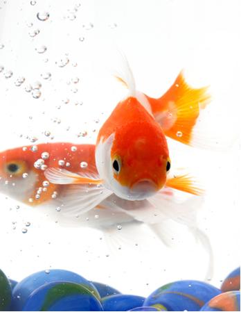 Nos ecossistemas aquáticos, a concentração de oxigênio dissolvido tem papel primordial na manutenção da vida dos peixes e de outras espécies aeróbias