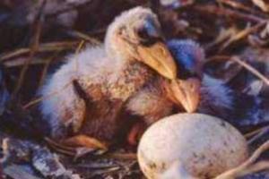 O ovo é uma estrutura relacionada a alguns casos de reprodução sexuada.