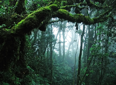 As florestas abrigam grande parte da nossa biodiversidade e desempenham inúmeros papéis biológicos essenciais à vida