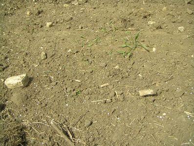 Os solos e suas composições são extremamente importantes para os seres vivos