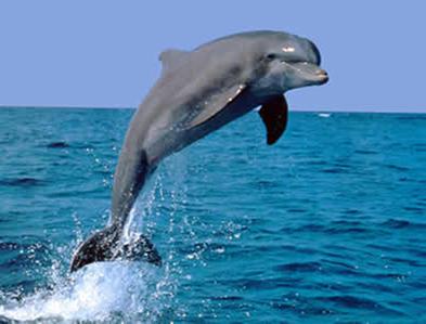 Ao saltar para fora da água, o golfinho ganha energia potencial gravitacional, obtida através da energia cinética com a qual nadava