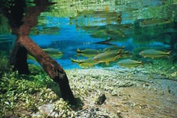 Rio Sucuri em Bonito-MT.