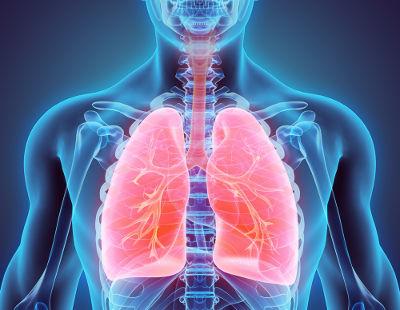 O sistema respiratório é constituído por uma parte condutora e uma porção respiratória