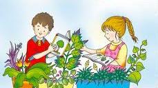 A botânica é a parte da biologia que estuda as plantas