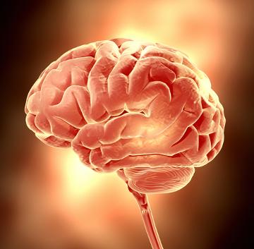 Durante a neurulação ocorre o processo de formação do tubo nervoso, que dará origem ao sistema nervoso