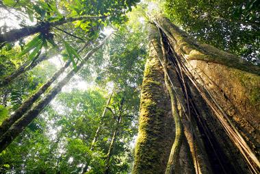 As Unidades de Conservação visam conter o avanço da destruição dos recursos naturais