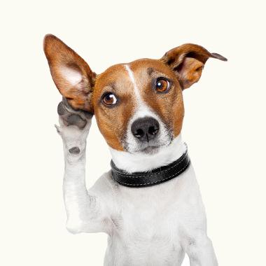 O intervalo da audição canina é maior que o dos seres humanos. O que, para nós, são ultra ou infrassons, para os cães, são sons audíveis