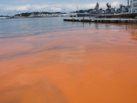A maré vermelha é um exemplo de amensalismo