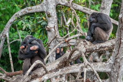 Um grupo de indivíduos de uma mesma espécie e em uma mesma área forma uma população