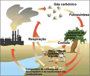 O carbono é encontrado no ar atmosférico e também dissolvido nas águas de mares, rios e lagos