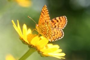 Muitas flores são vistosas, atraindo diversos animais.