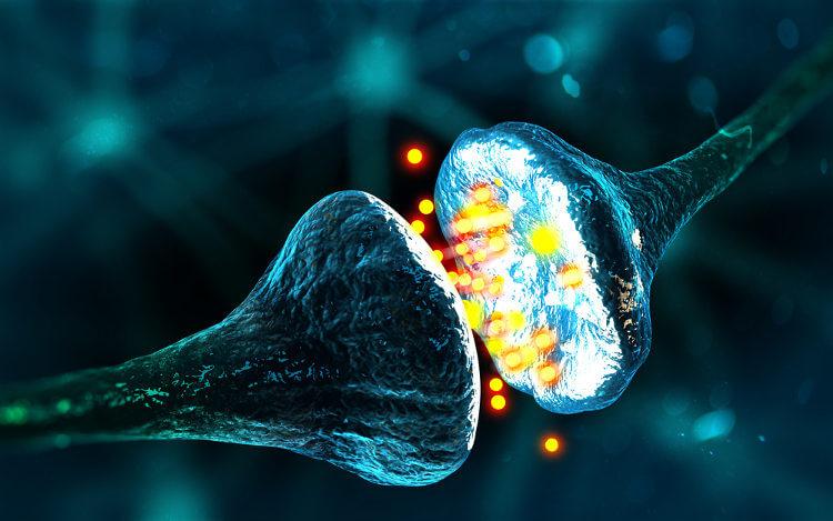 Os neurotransmissores são mensageiros químicos produzidos pelos neurônios.