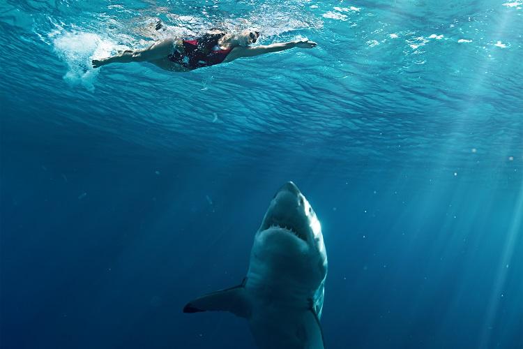 Os tubarões podem confundir os humanos com suas presas habituais